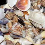shelling tours in naples bonita springs cruises