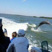 Dolphin Tour in Southwest Florida